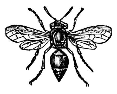 Card Making Wasp where the card making wasp is almost superior to the bee vintage line drawing or engraving illustration. 일러스트