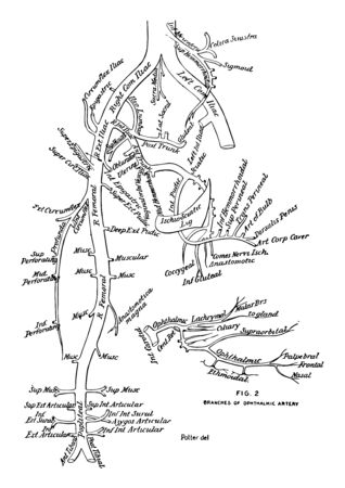 This diagram represents Branches of the Aorta vintage line drawing or engraving illustration.