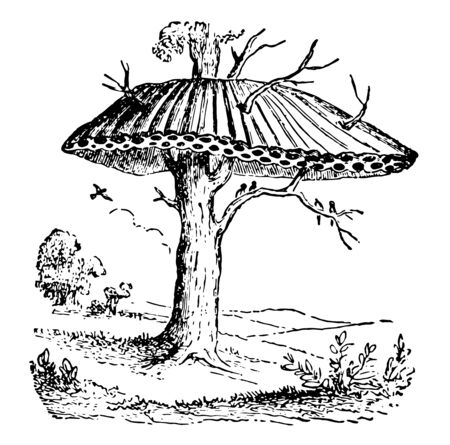 Nest of Sociable or Republican Birds which instigated by affection for its progeny vintage line drawing or engraving illustration. Çizim