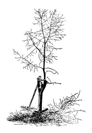This illustration represents Tree on a City Street being trimmed for firewood, vintage line drawing or engraving illustration.