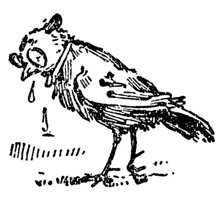 The Death and Burial of Robin this scene shows a bird crying and tears falling down from eyes on ground vintage line drawing or engraving illustration