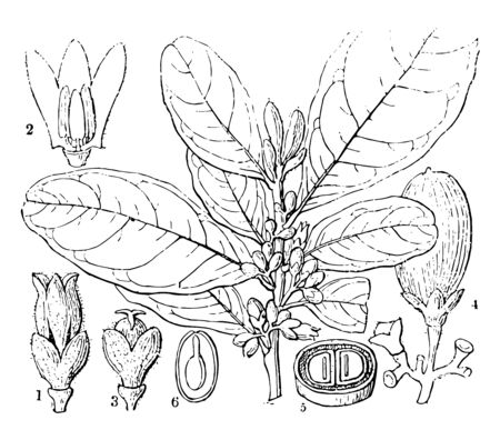 In this picture some different plants are given. There are flowers fruit leaves and seed vintage line drawing or engraving illustration.