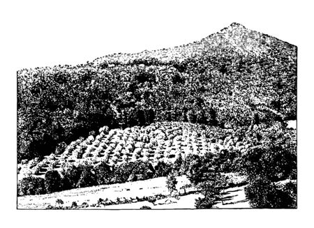 This illustration represents Mountain Orchard in Virginia, vintage line drawing or engraving illustration. Çizim