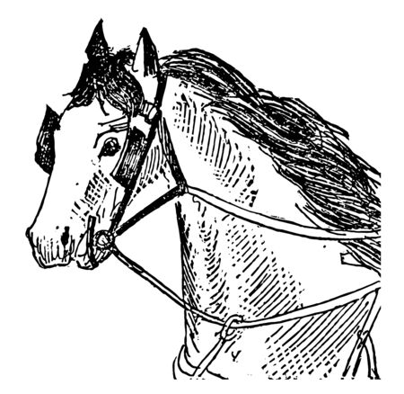 This illustration represents Rein which is a long narrow strap attached at one end to a horse bit vintage line drawing or engraving illustration. Illustration