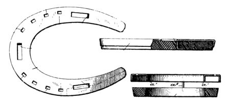 This illustration represents Cushioned Hooves Horseshoe which is develop strong hooves as a matter of natural selection, vintage line drawing or engraving illustration.