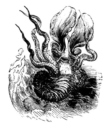 Greater Argonaut is a cephalopod and a species of pelagic octopus also known as a paper nautilus vintage line drawing or engraving illustration.