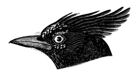 This image represents Long crested Jay vintage line drawing or engraving illustration.