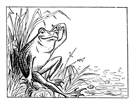 Frog Sitting on Bank and Scratching Head this scene shows a frog sitting on the bank of a pond and scratching his head vintage line drawing or engraving illustration