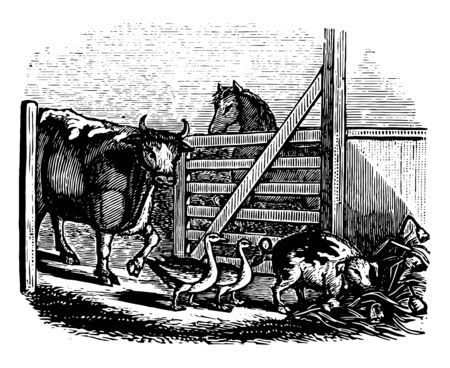 What is Everybodys Business is Nobodys Business cow farm animals gate goose horse kproverb vintage line drawing or engraving illustration