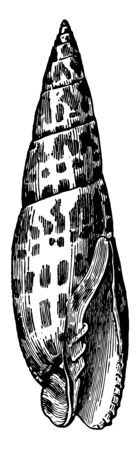 Mitra Episcopalis is white ornamented with square spots of a fine red vintage line drawing or engraving illustration.