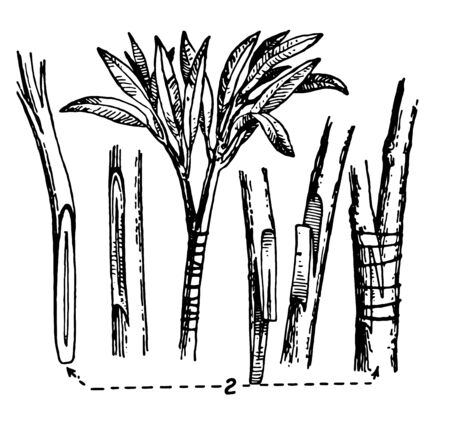 This illustration represents Veneering which consists in placing together the two cut surfaces of different plants in such a way, vintage line drawing or engraving illustration.