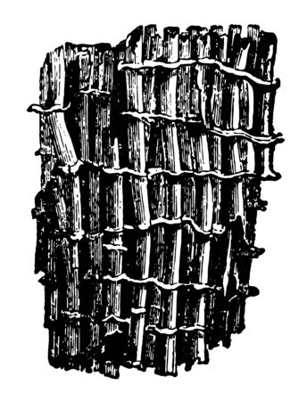 Magnified Portion of Tubipora Musica which is formed by the combination of distinct vintage line drawing or engraving illustration.