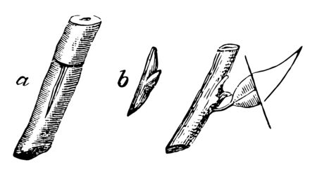 This illustration represents Shield Budding which is prepared by removing half the leaf vintage line drawing or engraving illustration.
