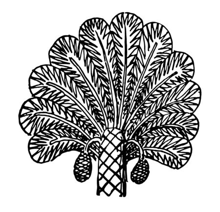 Assyrian Ornament is a Palm tree from a relief vintage line drawing or engraving illustration.