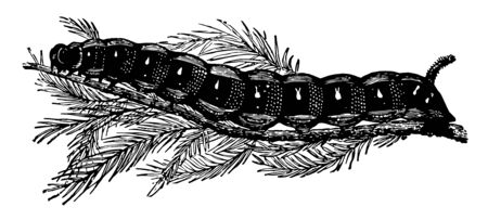 Larva of Deilephila Euphorbiae is almost always found on the Cyprus leafed spurge vintage line drawing or engraving illustration.