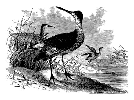 This illustration represents Willets vintage line drawing or engraving illustration.