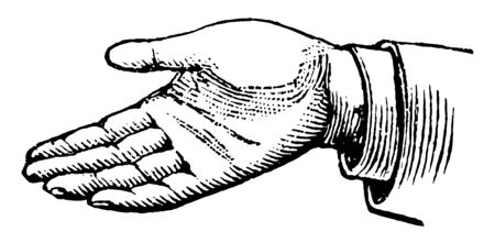 This picture represents the hands position in a simple affirmation vintage line drawing or engraving illustration.