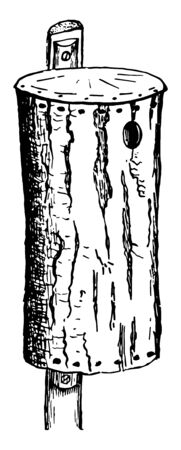 Chestnut Bark Nesting House where chestnut is a large and monoecious deciduous tree of the beech, vintage line drawing or engraving illustration. Ilustração