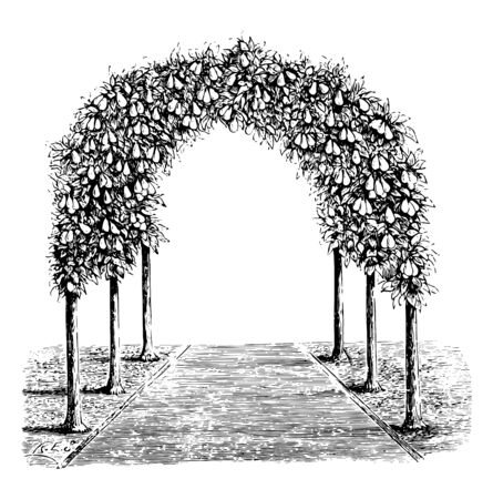 This illustration represents Pear Tree Arbor which is used for covering a portion or the whole of a garden vintage line drawing or engraving illustration.