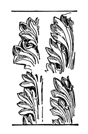 Acanthus Leaves an ornament may be carved into stone wood to resemble leaves the Acanthus genus of plants claimed as the main model vintage line drawing or engraving illustration.