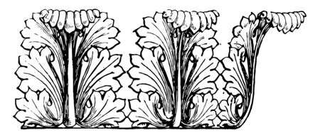 Acanthus is small herbaceous plants of southern Europe spinosely toothed leaves cultivated for the sake of their beautiful foliage vintage line drawing or engraving illustration. Illusztráció