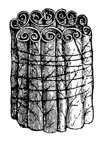 Section of Willow Leaves Rolled by a Caterpillar which bind up a good many leaves in one packet vintage line drawing or engraving illustration.