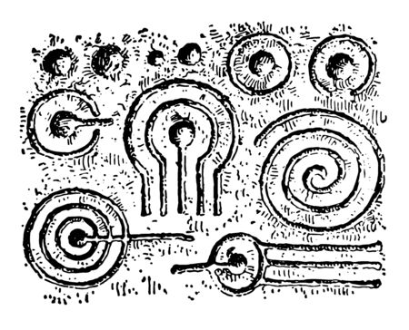 Markings of cup and ring are make using a pencil and pigment of the skin is absent vintage line drawing or engraving illustration.