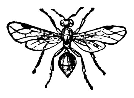 Russet Ant where the warlike tribes never carry off any other vintage line drawing or engraving illustration.