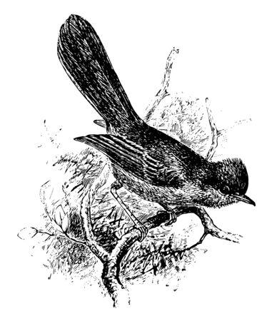 Dartford Warbler is a typical warbler from the warmer parts of western Europe vintage line drawing or engraving illustration. 向量圖像