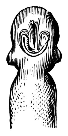 A developing tadpole head which are usually wholly aquatic vintage line drawing or engraving illustration. Иллюстрация