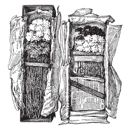 Carnations are usually packed in standard horizontal fiberboard boxes, vintage line drawing or engraving illustration.