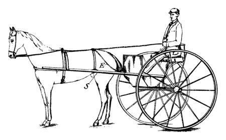 Bridle Connected Safety Rein is worn by horses who are to be domesticated, vintage line drawing or engraving illustration. Çizim
