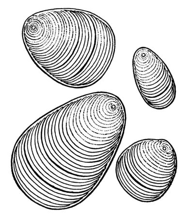 A picture showing the magnified view of Canna starch which looks like some fingerprint, vintage line drawing or engraving illustration.
