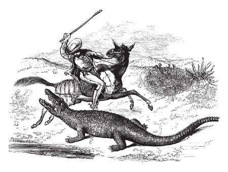 Caiman lunging at a man on horseback, vintage line drawing or engraving illustration.