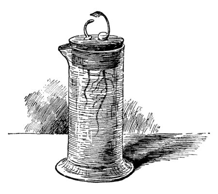 An image of germinating peas, growing in water, one deprived of its cotyledons, vintage line drawing or engraving illustration.