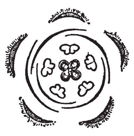 It is the Diagram of horizontal of the Borage flower, vintage line drawing or engraving illustration. Illusztráció