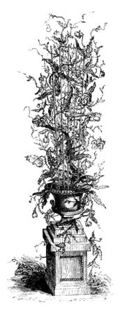 In this image of Cactus plant and it is planted in pot, vintage line drawing or engraving illustration. Ilustrace