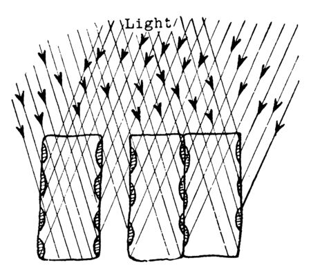 This is Plant Light Intake.it takes a light for the food generation process for the plant. It showing how the position of the chlorplasts against the vertical walls of the palisade cells, vintage line drawing or engraving illustration. Illusztráció