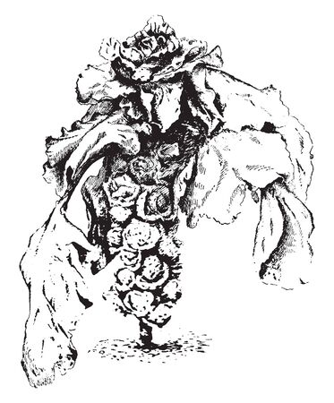 Brussels sprouts are a source of fiber, manganese, potassium, choline, and B vitamins. It have been linked to the prevention of a number of cancers, including colon cancer, vintage line drawing or engraving illustration. Foto de archivo - 132826635