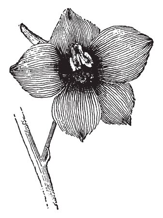 This is Larkspur flower, of their generally similar floral structure, vintage line drawing or engraving illustration.