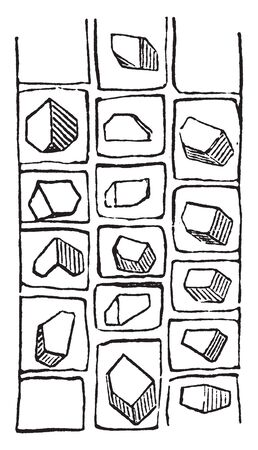 This is the crystals of the inner bark of the locust. This is also used as firewood and it is easy to split. It has 3 dimensional cubical structures, vintage line drawing or engraving illustration.