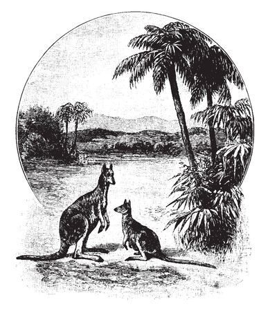 Australian Scenery which is separated from Asia by the Arafura and Timor seas, vintage line drawing or engraving illustration. Illusztráció