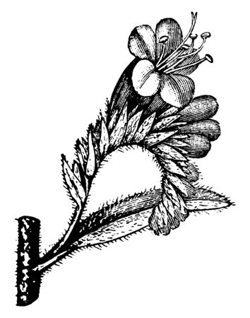 There is a flower on top of the twig, lots of leaves and forks attached to the twig, vintage line drawing or engraving illustration.