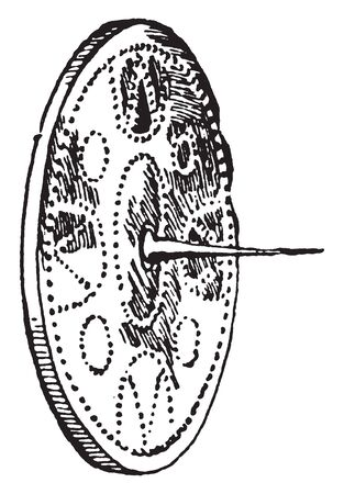Highland targes were the last type of European shields to be used actively in battle, vintage line drawing or engraving illustration.