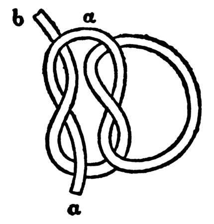 Reef Knot is an ancient and simple binding knot used to secure a rope or line around an object, vintage line drawing or engraving illustration.
