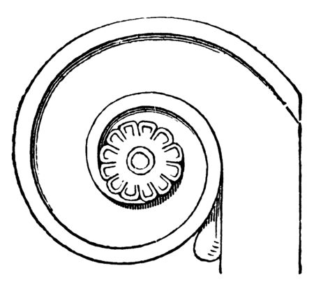 Volute of the Persian Column which is in the shape of a globular vessel, vintage line drawing or engraving illustration.