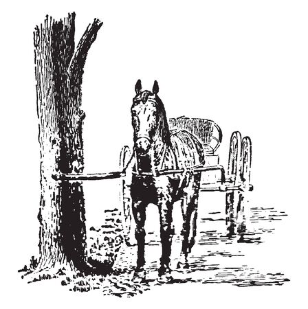 Hitching is a safe method of hitching a horse to a tree, vintage line drawing or engraving illustration.