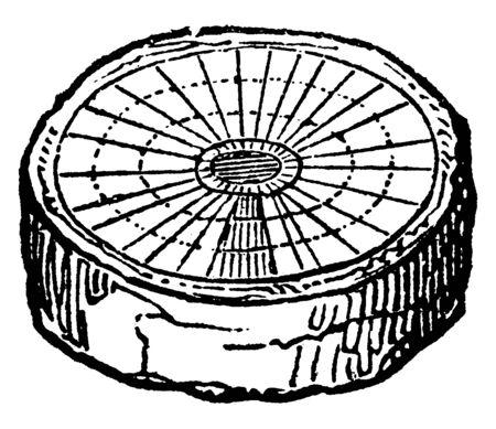 Ein Bild, das ein Exogen zeigt, bei dem es sich um eine Pflanze handelt, die extern wächst, eine Vintage-Linienzeichnung oder eine Gravurillustration. Vektorgrafik