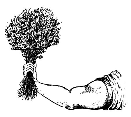 In this picture, hands are seen; the man has taken a bunch of herbs in her arm, vintage line drawing or engraving illustration.