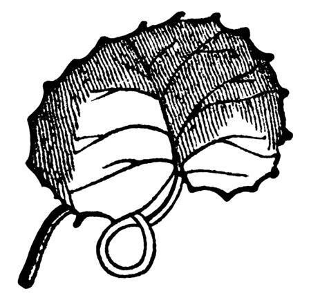 This is a Reniform leaf. This leaf is a simple kidney-shaped leaf, vintage line drawing or engraving illustration. Ilustracja